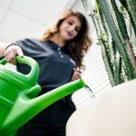 Das Team von Bauer Gebäudereinigung bei der umsichtigen Pflanzenpflege und Blumengießen